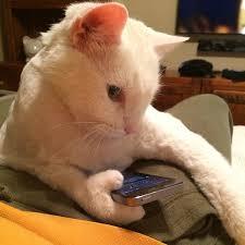 texting cat